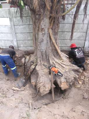 24 HR Emergency Tree cutting/Tree Removal/Tree Pruning/ Fast & affordable image 5
