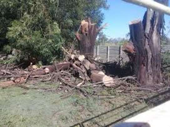 QUICK AFFORDABLE TREE FELLING AND LANDSCAPING SERVICES image 9