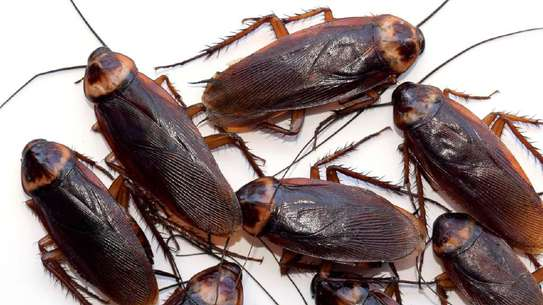 Professional Pest Control Services| Best Bed Bug Control,Cockroach Control.100% Satisfaction Guaranteed. image 6