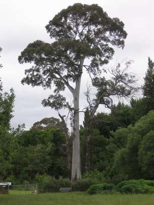 Tree Experts | Tree Removal, Tree Pruning-Free Consultation.Call Now image 9