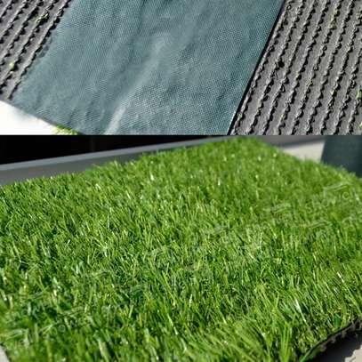 Turf Grass image 4