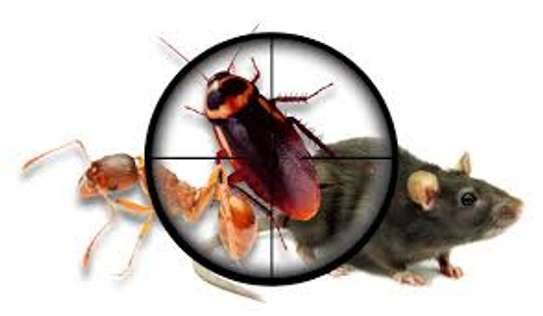 Bed bugs Control Services image 1
