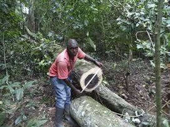 Tree Cutting & Removal.Fast, Professional And Affordable.Landscaping & Gardening Services image 1