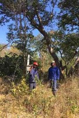 Cheap Tree Cutting Services Nairobi and Surrounding. image 3