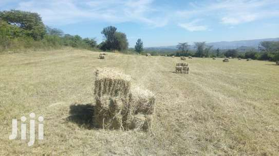 1000 BALES OF  HAY AVAILABLE FOR SALE(BHOMA RHODES) image 2