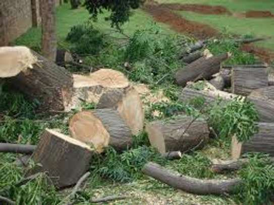 Tree cutting & Site Clearance -Free Quotes image 12
