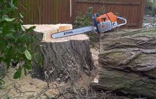 Tree cutting & Site Clearance -Free Quotes image 8