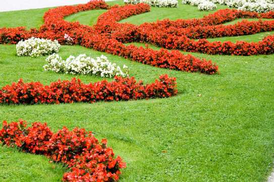 Best Gardening & Lawn Mowing Services|Contact Us Today. image 15