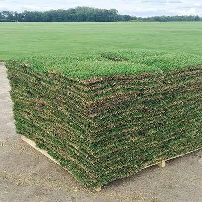 Kikuyu Grass (Sod) image 1