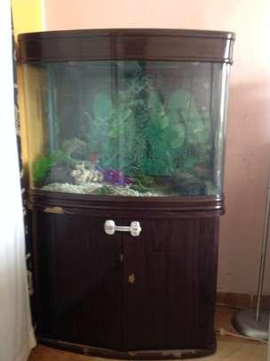 Aquarium image 1