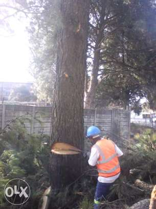 Tree Cutting & Removal.Fast, Professional And Affordable.Landscaping & Gardening Services image 3