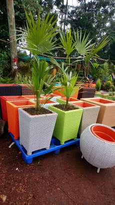 Rattan Outdoor Planters image 1