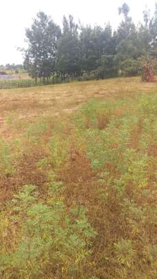 Quarter plot near Kirinyaga University.