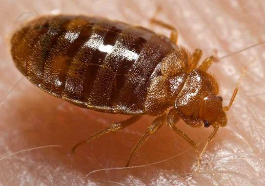 Trusted & Vetted Bed Bug Removal Professionals.Call Now image 2