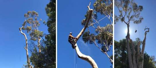 QUICK AFFORDABLE TREE FELLING AND LANDSCAPING SERVICES image 2