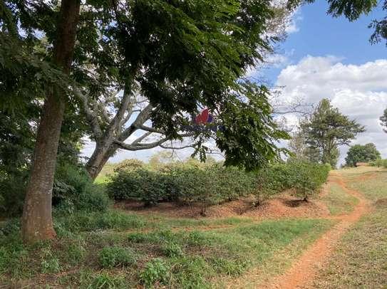 0.25 ac land for sale in Ruiru image 10