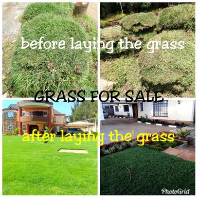 Grass for sale