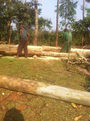 Tree felling/ frame making image 5