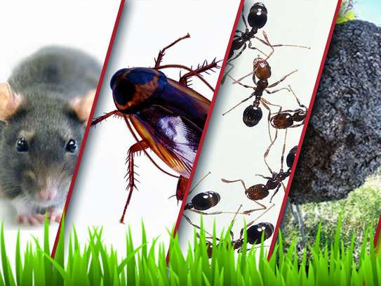 Trusted & Vetted Bed Bug Removal Professionals.Call Now image 6