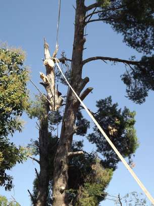 Tree Cutting services - Competitive Tree Felling Removal.Call And Get Free Quote Now. image 4
