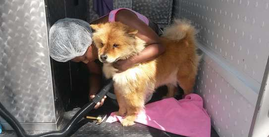 We offer safe, comfortable mobile pet grooming services image 1