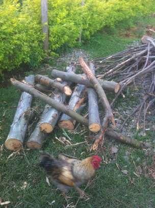 Tree felling/ frame making image 3
