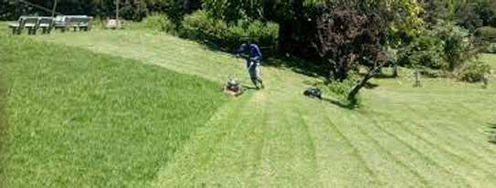 Garden Maintenance Services | Hire Best Gardeners When You Need Them | Contact us today! image 5