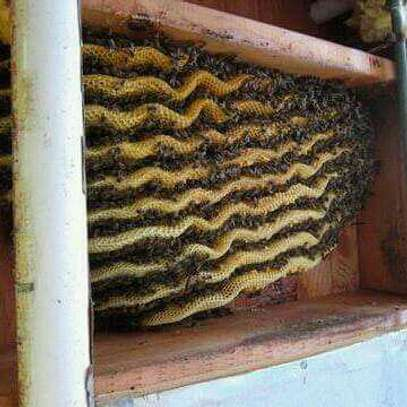 Bee removal services #savethebees