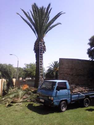 Tree Felling Removals - All Tree Felling. All Areas. image 3