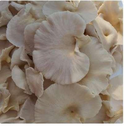 Mushroom image 1
