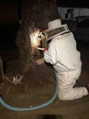 Beekeeping Services Meru   Make an impact. Bring bees to your backyard. image 9