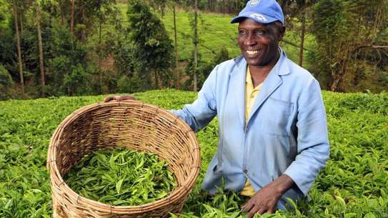 Are you an Employer looking for reliable staff/ Farm Workers?
