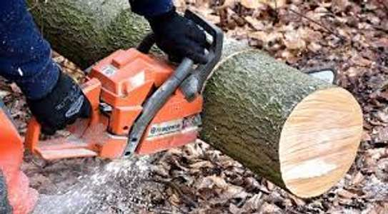 Tree cutting & Site Clearance -Free Quotes image 5