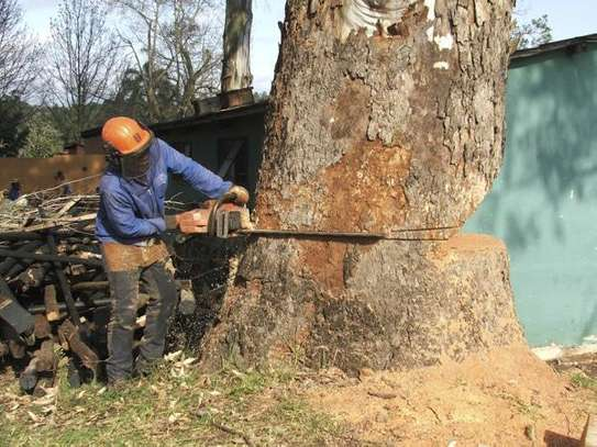Hire Tree Trimming and Removal Professionals In Nairobi & Mombasa.Get A Free Quote Today.