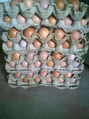 Table eggs for sale