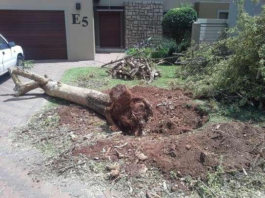 Gardening Services Nairobi /Landscape & Garden Designs image 3