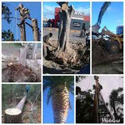 QUICK AFFORDABLE TREE FELLING AND LANDSCAPING SERVICES image 5