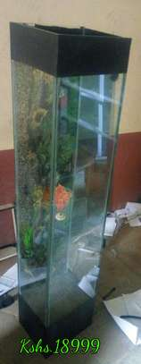 Tower Stand Aquarium image 1