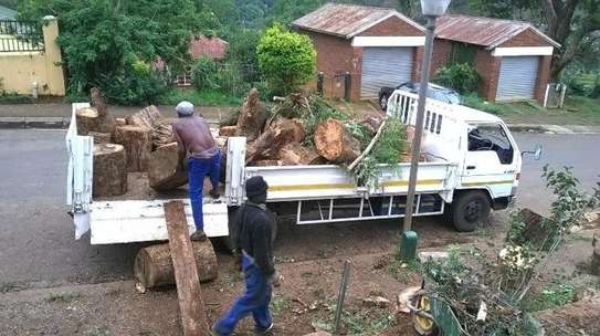 Tree Experts | Tree Removal, Tree Pruning-Free Consultation.Call Now image 1