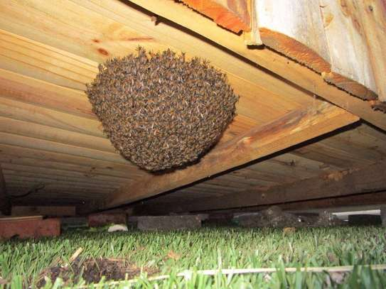 Are you experiencing a Bee Infestation? We can help you! image 1