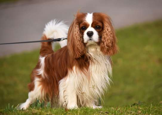 Hire Quality Dog Grooming Services,Dog Walking,Pet Feeding,Pet Sitting & Pet Training Service.Get A Free Quote Today image 15