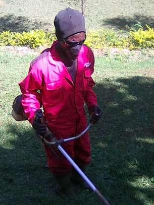 Landscaping, gardening and maintaining. image 2