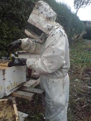 Modern  Bee Farmers image 2