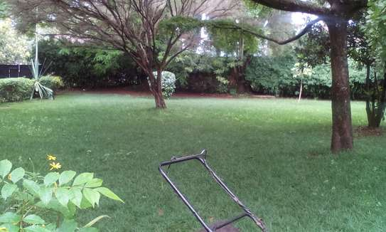 Lawn Mower And Grass Cutting Services image 3