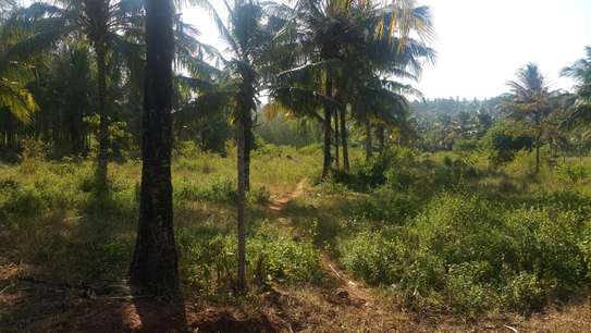 Quarter acre piece of land for sale at Vipingo-Gongoni ID2477