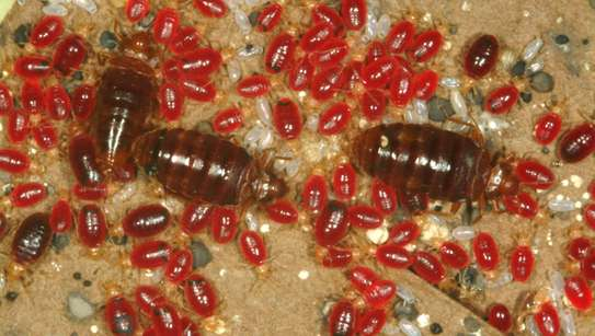 Bed Bug Extermination Services.lowest Price Guarantee.Call Now.We are 24/7.