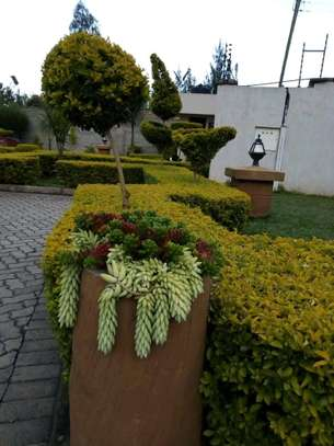 landscaping and other services image 2