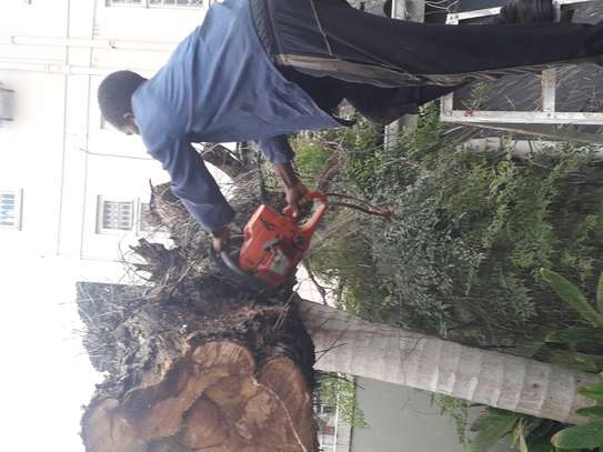 Tree Cutting services - Competitive Tree Felling Removal.Call And Get Free Quote Now. image 3
