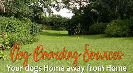 DOG BOARDING - YOUR DOGS HOME AWAY FROM HOME