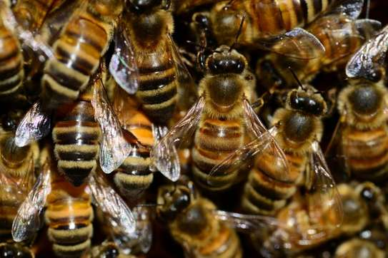 Bee Removal Professionals.Lowest price guarantee.Get a free quote.